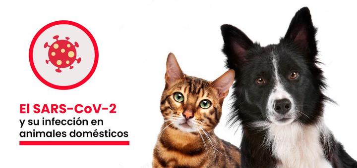 El COVID-19 en animales domésticos