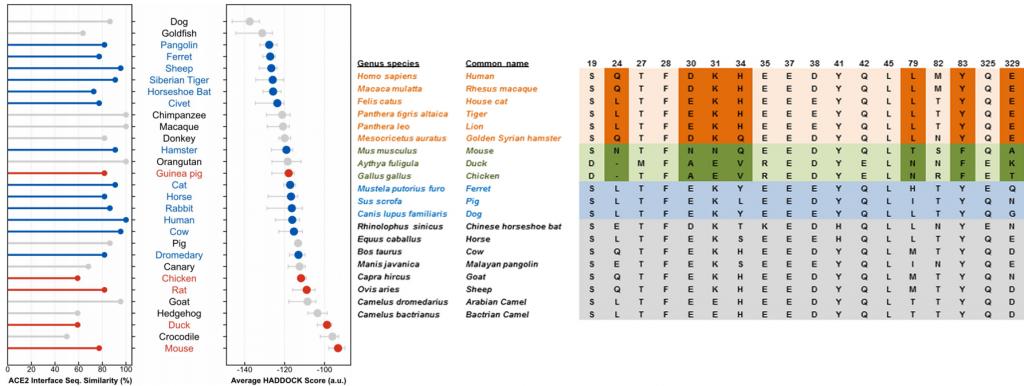 Afinidad del COVID-19 por animales domésticos