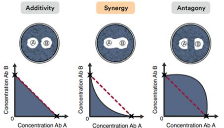 Describir los diferentes tipos de interacciones antimicrobianas