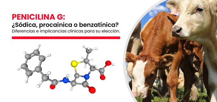 Penicilina G: ¿Sódica, procaínica o benzatínica? Diferencias e implicancias clínicas para su elección