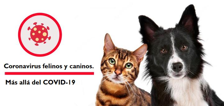 Coronavirus felinos y caninos. Más allá del COVID-19