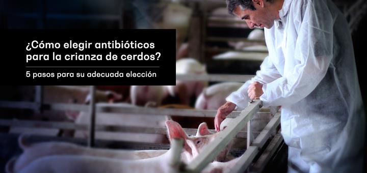 ¿Cómo elegir antibióticos para la crianza de cerdos?  5 pasos para su adecuada elección