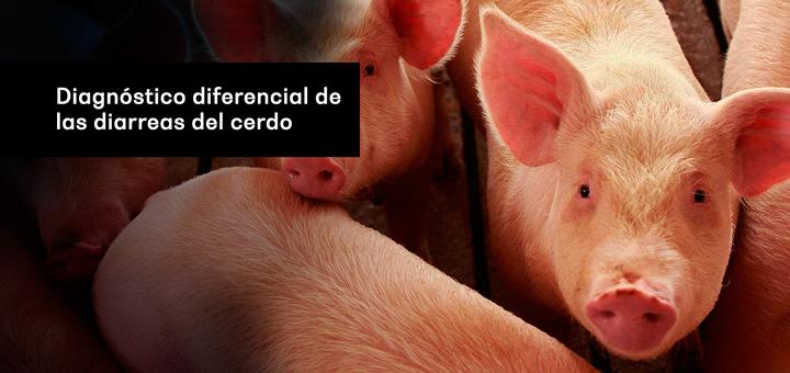 Diagnóstico diferencial de las diarreas del cerdo