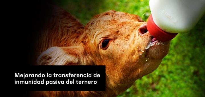 Mejorando la transferencia de inmunidad pasiva del ternero